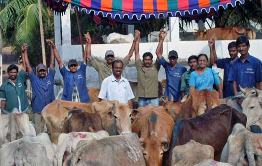 Cows saved by Visakha