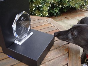 Mr. Bobby, Sue's greyhound, inspecting the RSPCA award.
