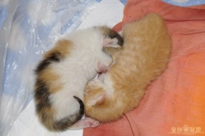 two kittens are growing fast