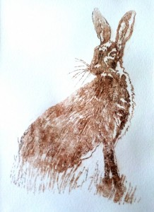 Alert Hare - courtesy of Susan Brown