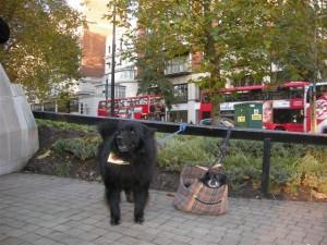 aswa service 11Nov2012 canine attenders (Small)