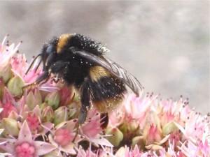 Pollen collector (c) Jan Sheppard