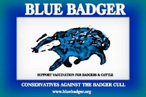 blue badger