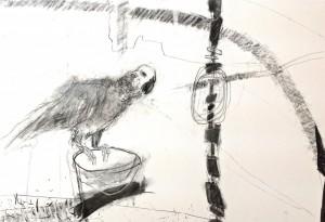 Raystede bird (c) Ann Johnson