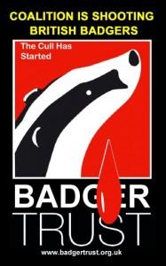 badger new logo