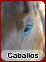caballos-cyd