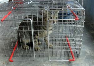 cat_cage01