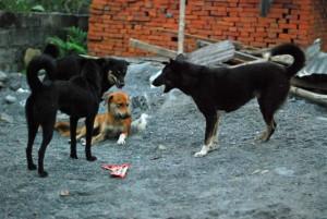 street_dogs03