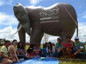elephant voices
