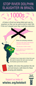 river-dolphin-infographic