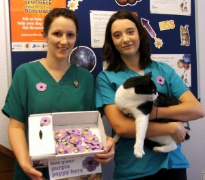 The Foreman and Hanna veterinary group has just come on board to sell the poppies in Eastbourne. Helen Elliott and Jean Clarke (who took the pictures) have worked immensely  hard with our local veterinary practices. So big thanks to you Helen and Jean. Pictured here are Faye, Katherine and Bungle the practice cat.