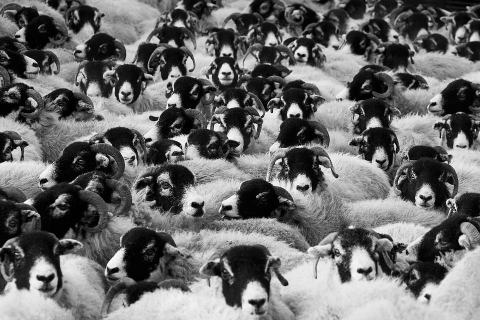 Member's report: APPG meeting on the environmental impact of livestock farming