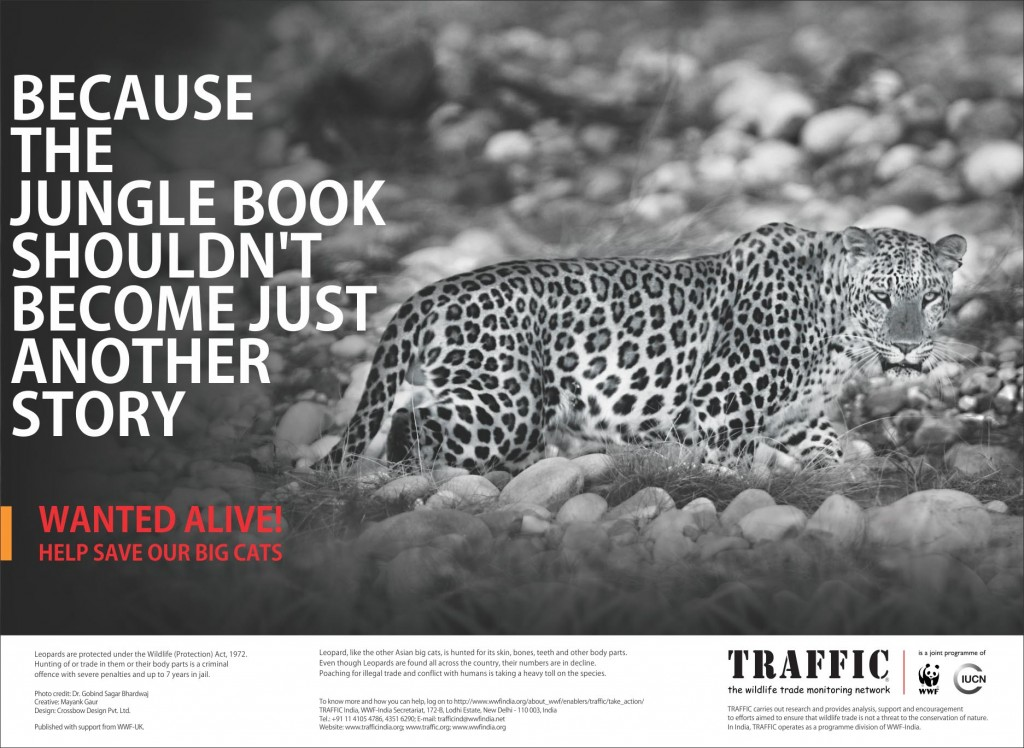 WANTED ALIVE: BIG CATS CAMPAIGN IN INDIA | Quaker Animals UK