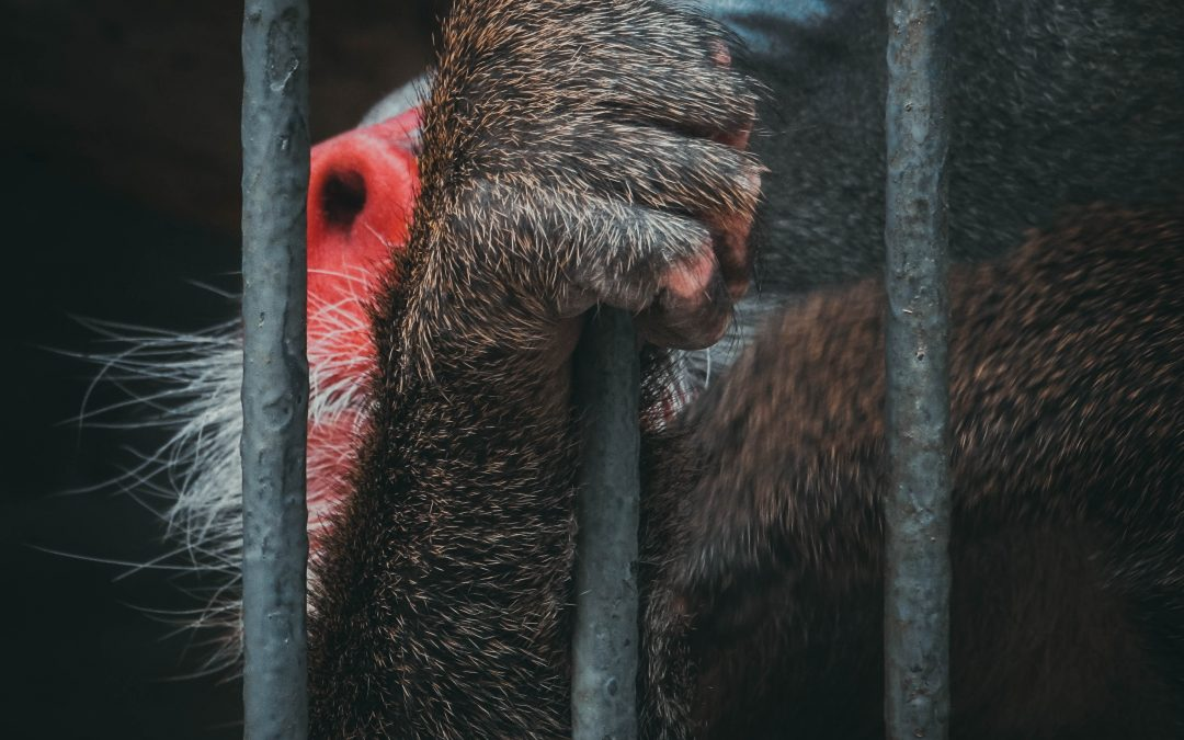 A Quaker Response to Animal Suffering
