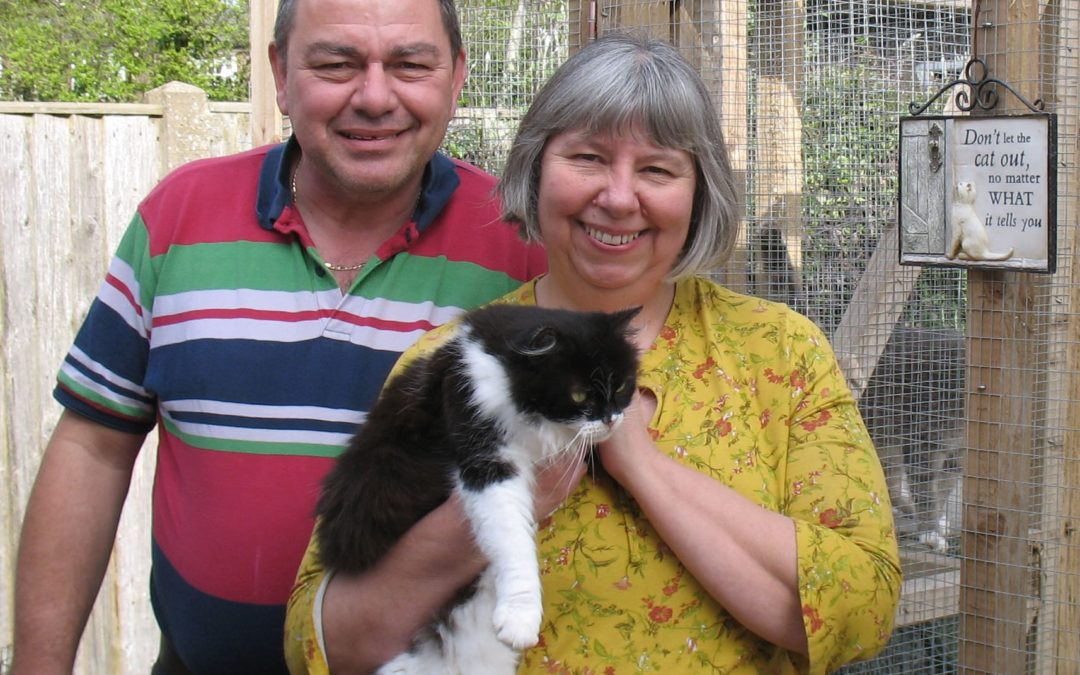 Charity Profile: Cat and Kitten Care